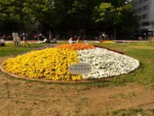 西3丁目の北海道新聞によるスポンサー花壇の写真
