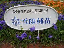 西5丁目の雪印種苗によるスポンサー花壇の看板の写真