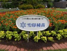 西5丁目東側の雪印種苗のスポンサー花壇の名札