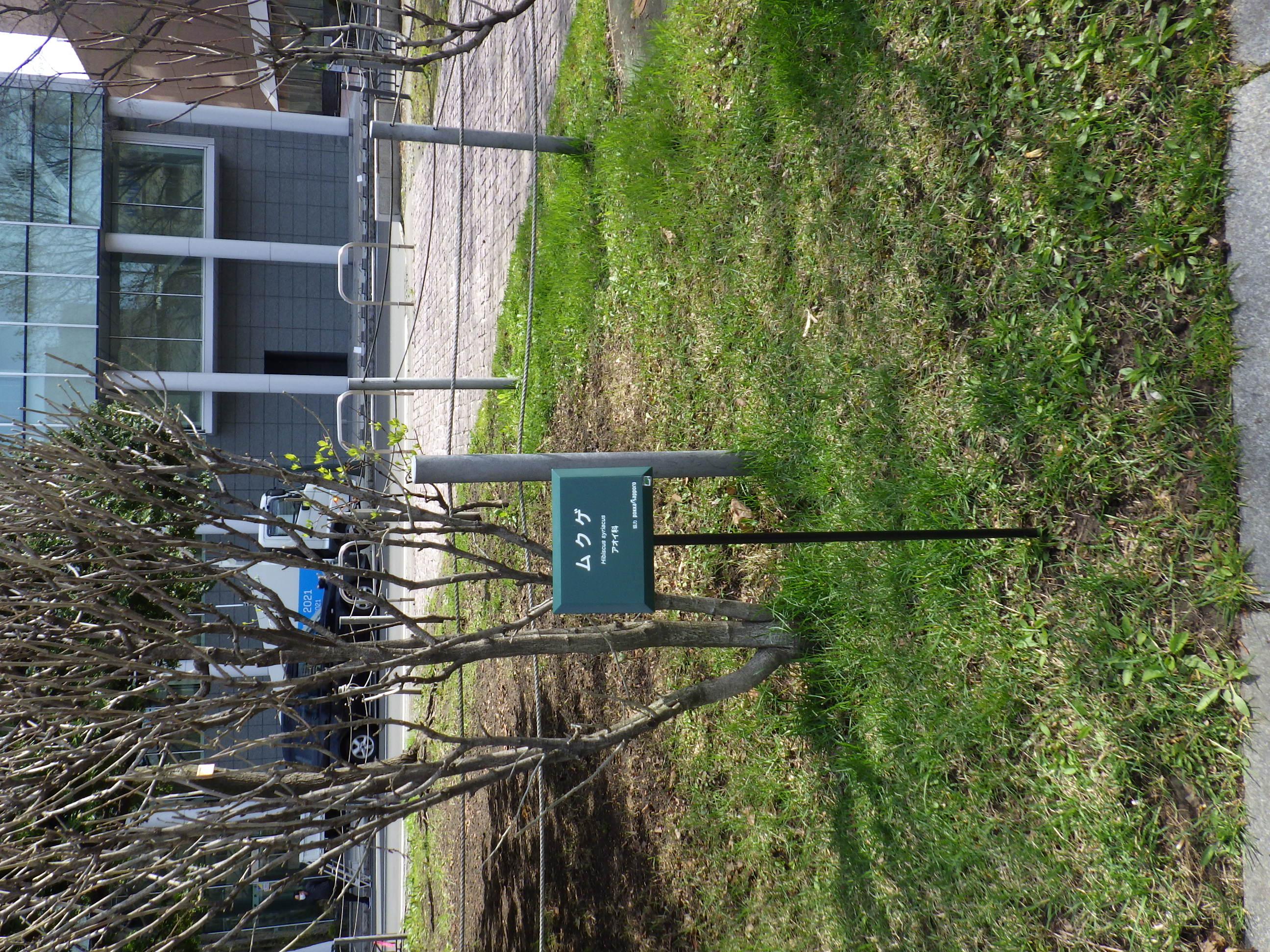 ポッカサッポロさんから寄贈された低木用の樹名板