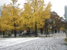大通公園の芝生に積もる雪とイチョウの画像