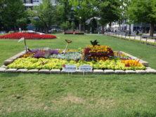 令和元年の花壇コンクール受賞花壇18