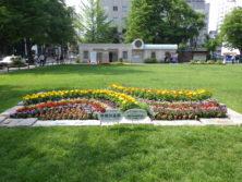 令和元年の花壇コンクール受賞花壇19
