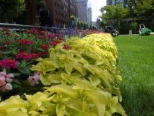 0812西5丁目花壇