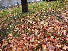 1011落葉の絨毯
