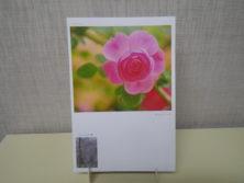 直井和子さんのバラの写真のポストカードの画像