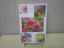 直井和子さんバラの写真のポストカードの画像2
