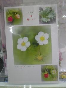 直井和子ポストカードワイルドストロベリー柄の画像