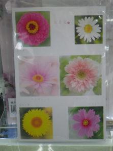 直井和子ポストカードキク科の花々の画像