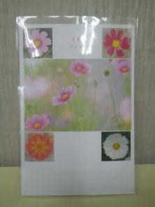 コスモスのポストカードの画像