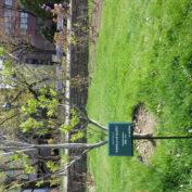 ポッカサッポロさんから寄贈されたライラック用の樹名板