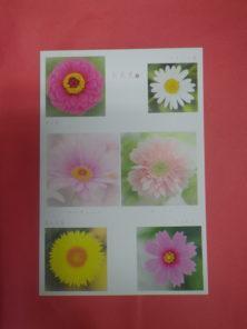 なおいかずこポストカードお花見北海道を彩るキク科の花々の画像