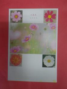なおいかずこポストカードお花見コスモス